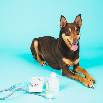 Dog and veterinary equipment