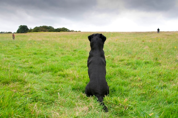 A dog waiting for his owner