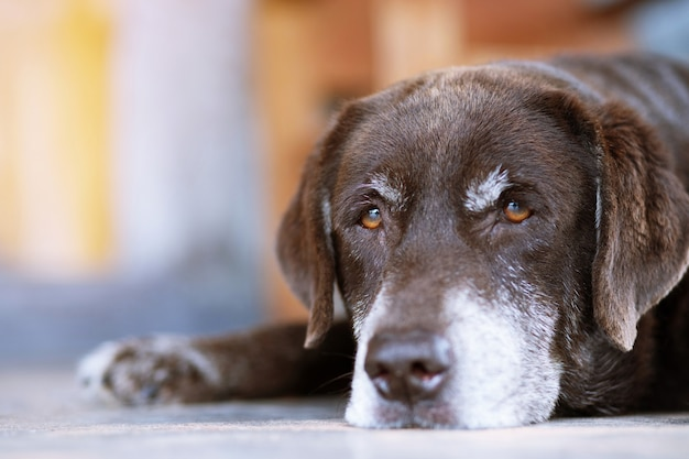 Собака ждет перед концепцией домашних животных дома