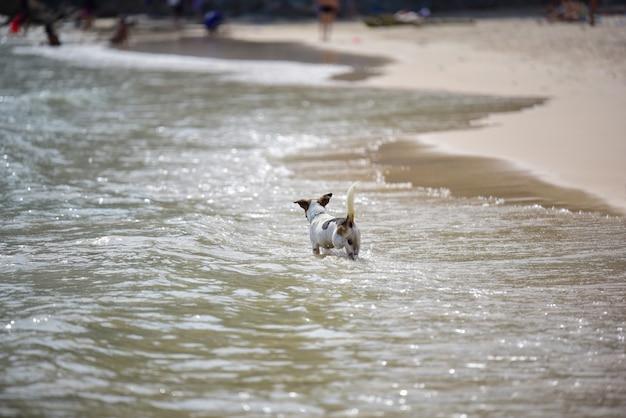 Dog walk and play on the beach