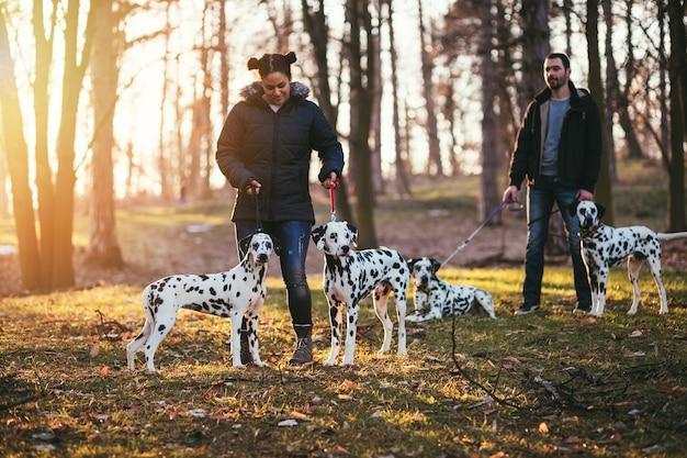 Выгул собак с далматинскими собаками, наслаждающимися в парке.