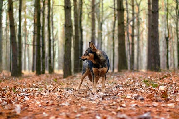 Выгул собак в осеннем лесу