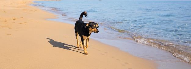 해변 배너를 걷는 개