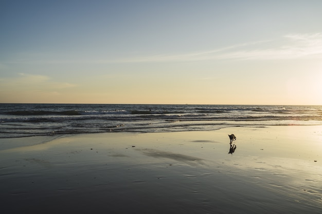 美しい海の波とビーチを歩く犬