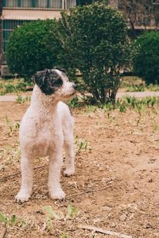 Dog walking in park