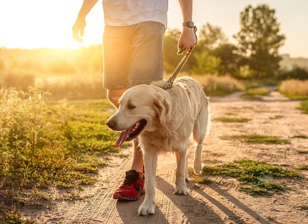 Собака гуляет с человеком по грунтовой дороге на закате