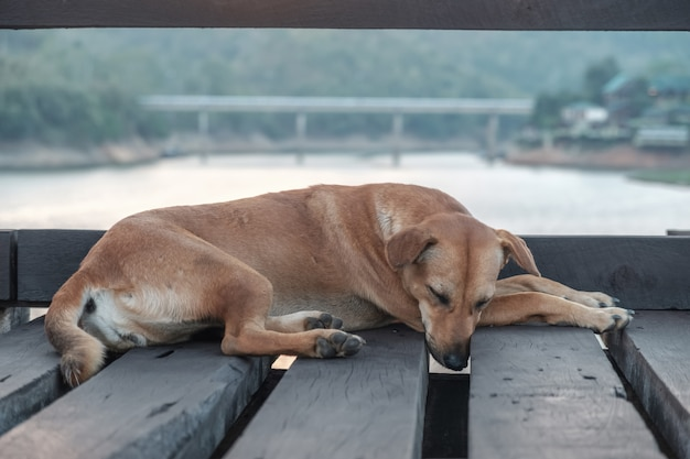 The dog was sleeping on a wooden bridge happily