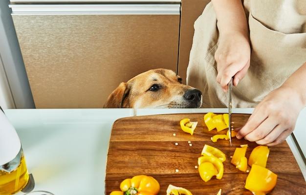 10代の若者が仮想オンラインワークショップを準備し、自宅のキッチンで健康的な食事を準備しながらタッチスクリーンタブレットでデジタルレシピを表示する様子を犬が見ています