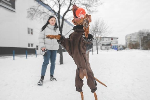재킷을 입은 개가 겨울에 공을 뛰어 넘습니다.