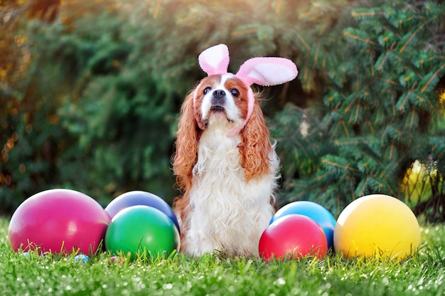 Dog wearing bunny ears with giant estaer eggs at the lawn