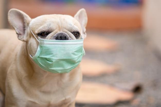 屋外に座っている医療用フェイスマスクを身に着けている犬。