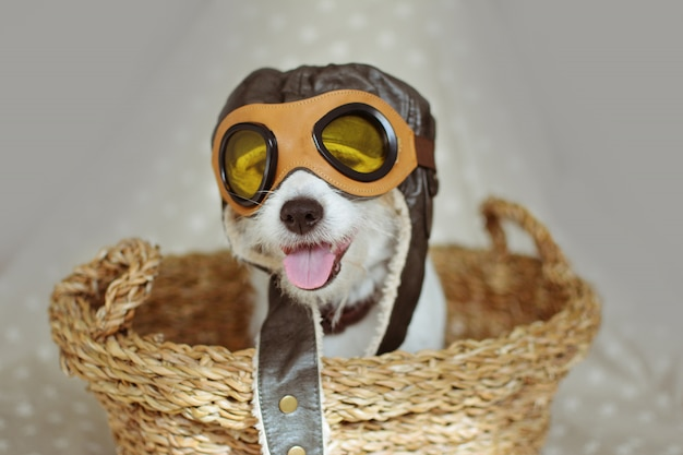 Dog wearing a pilot hat goggles inside a wicker basket against gray background.