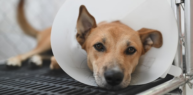 Dog wearing a protective cone on his neck