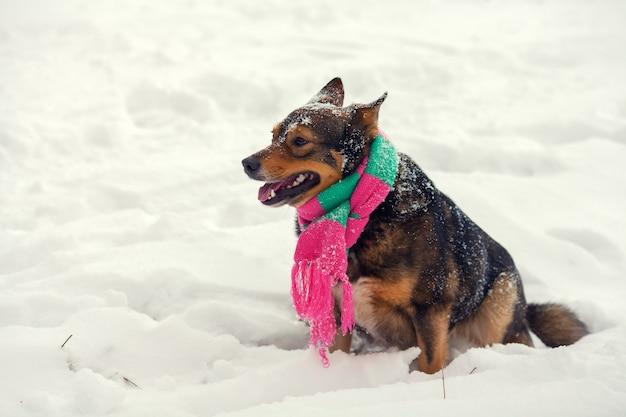 겨울에 야외 산책 스카프를 착용하는 개