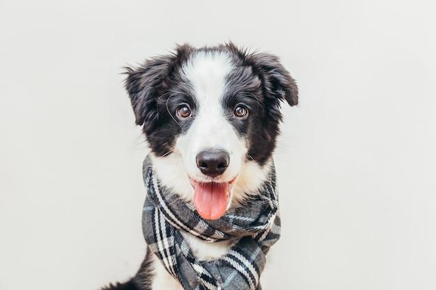 Собака носить теплый шарф одежды вокруг шеи на белом фоне