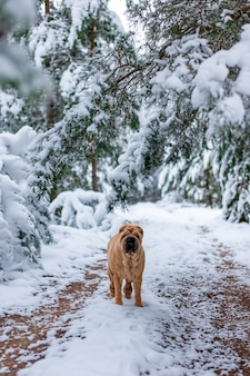 The dog in the winter forest