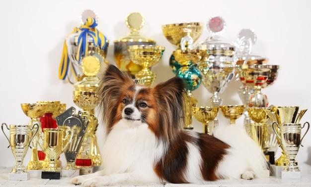 大会のカップがたくさんある犬
