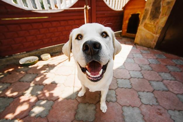 깊고 노란 눈을 가진 개는 체인에 서