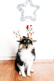 Dog with deer horns for new year and christmas, home decoration for the holiday, puppy