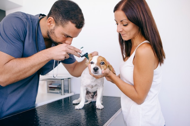 Dog with ear infection in the clinic