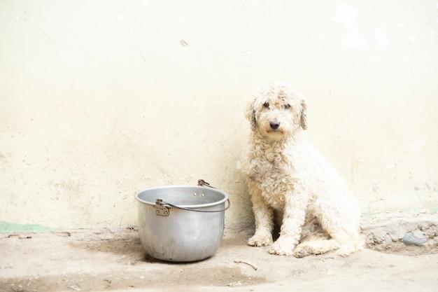 Dog with an empty saucepan
