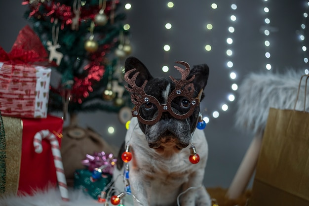 Dog with glasses with reindeer antlers and lights around the body between gifts and christmas tree.