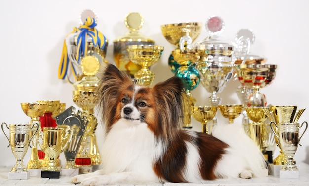 Dog with a lot of cups from competitions