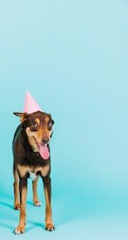 파티 모자와 개