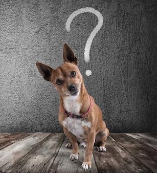 Собака с вопросительным знаком над головой. собака с насмешливым выражением лица