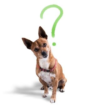 그의 머리 위에 물음표가있는 개. 익살스러운 표정으로 개