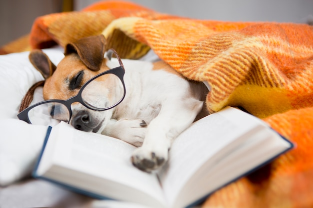 Dog with reading with glasses asleep in a comfortable bed with a book