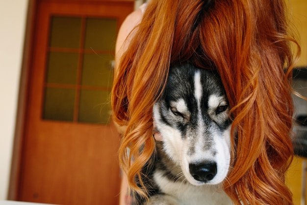 Dog with a red-haired wig