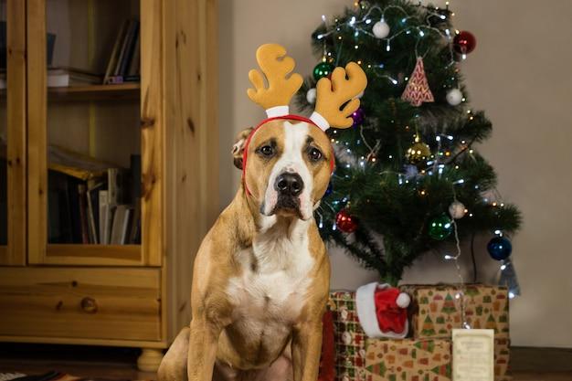 Собака с оленьей шляпой рудольфа сидит перед украшенной елкой и упакованными рождественскими подарками
