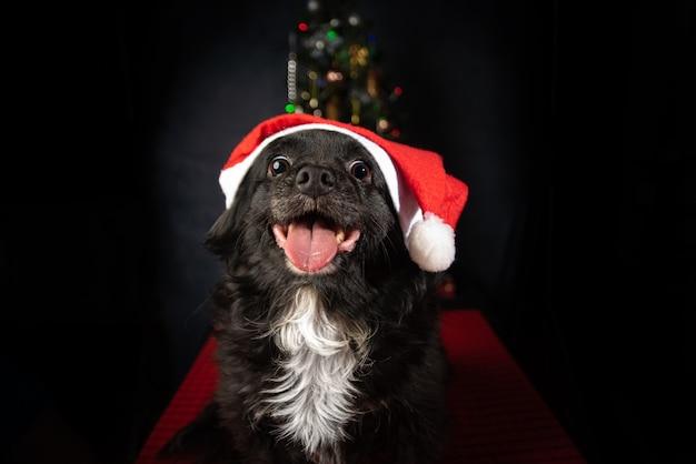 Собака с шляпой санта-клауса и рождественской елкой, на красной поверхности.