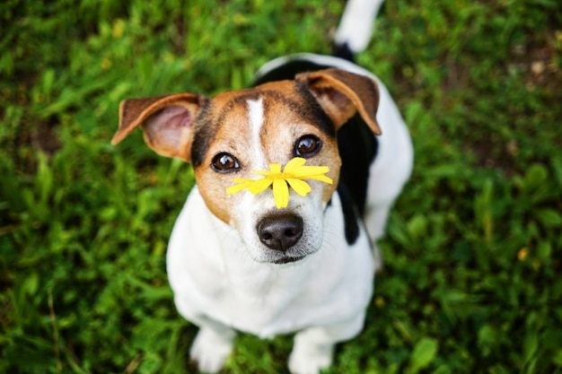 Dog with yellow flower looking at camera
