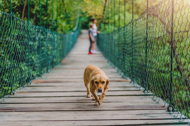 Dog on a wooden suspension bridge