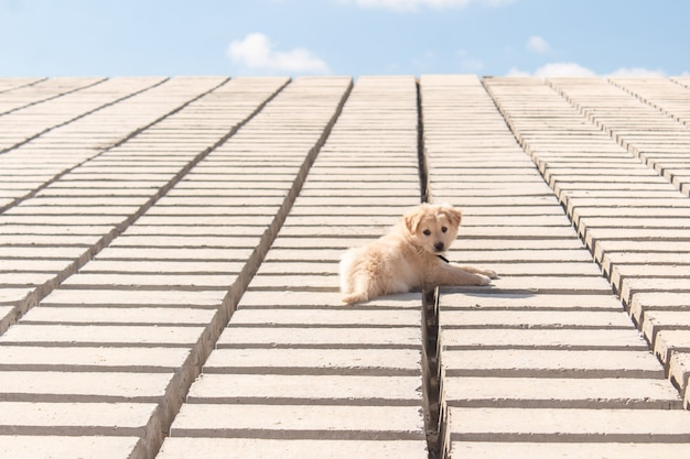 Собачка отдыхает на кирпичах на берегу.