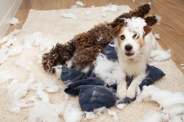 Собаки дома играют на полу