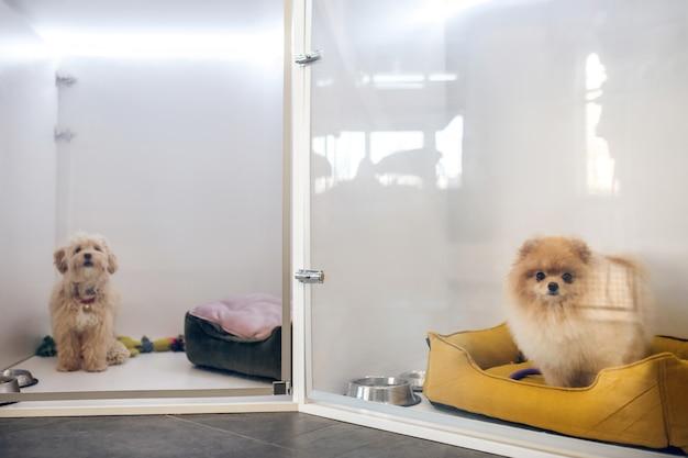 Собаки. милая пушистая собака в отеле для домашних животных ждет хозяина
