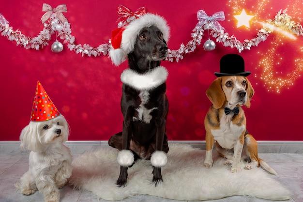 나비 넥타이 모자와 액세서리로 크리스마스 분위기로 분장한 개들