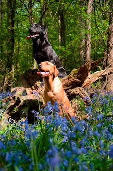 Dogs in a forest