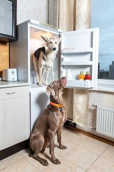 Собаки отдыхают на светлой кухне в помещении