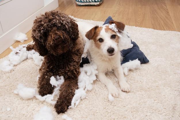 Концепция послушания собак. два щенка разрушили подушку.