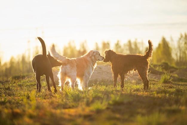 Собаки разных пород приветствуют друг друга обнюхиванием