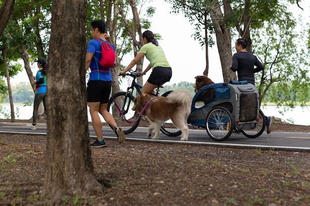 Dogs owner with cargocycle with rain tent doing jogging exercise in the park.
