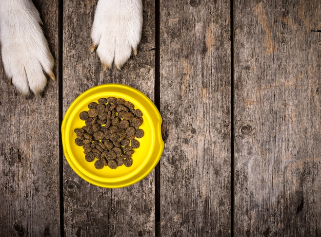 Dogs paws and bowl of dry nutrition. pet food concept