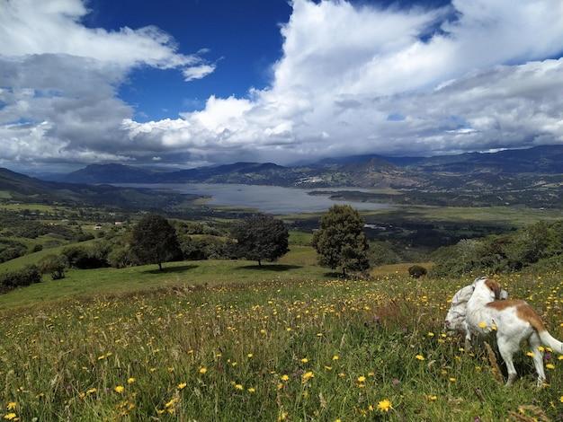 曇り空の下で湖を見下ろす黄色い花の牧草地で遊ぶ犬