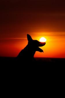 Силуэт собаки на закате в поле