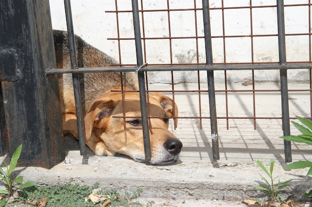 Dogs victims of animal abuse