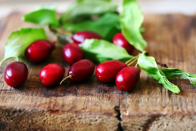 ハナミズキ。新鮮なハナミズキの果実と葉。